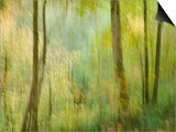 Impression of an Autumn Forest  North Lanarkshire  Scotland  UK  2007