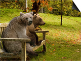 Bears Sitting on a Bench