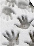Children's Handprints in a Spring Snow