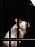 Mouse Behind Bars