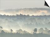 Ancient Pine Forest Emerging from Dawn Mist  Strathspey  Scotland  UK