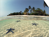 Three Seastars in Shallow Coastal Waters  Philippines  Split- Level Shot