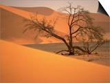 Tree in Namibia Desert  Namibia  Africa