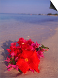 Hibiscus and Bouganvilla on Beach  Cayman Islands