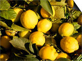 Close-Up of Lemons in the Market  Menton  Provence  Cote d'Azur  France