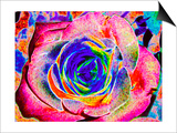 Rainbow-Colored Rose