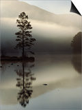 Scots Pine Tree Reflected in Lake at Dawn  Loch an Eilean  Scotland  UK