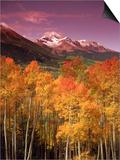 Autumn Aspen Colors  Mt Wilson  San Juan Nf  CO