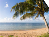 Palm Trees on the Beach  Anini Beach  Kauai  Hawaii  USA