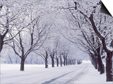 Maple Tree Grove in Winter  One of Four Seasons