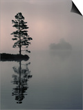 Lone Scots Pine  in Mist on Edge of Lake  Strathspey  Highland  Scotland  UK