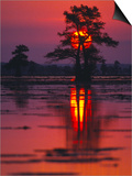 Cypress Swamp at Sunrise  Texas  USA