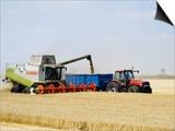 Combine Harvester Unloading Grain into Trailer  England