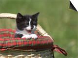 Cat  Lemgo  Germany