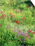 Wild Garden Pond
