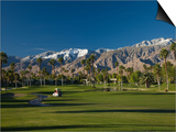 Palm Trees in a Golf Course  Desert Princess Country Club  Palm Springs  California