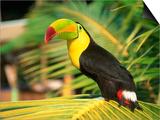 Parrot in Bird Park  Bay Islands  Hd