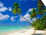 Pigeon Point  Tobago  Caribbean  West Indies