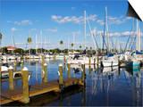Marina  St Petersburg  Gulf Coast  Florida  United States of America  North America