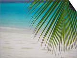 Palm Tree Leaf and Tropical Beach  Maldives  Indian Ocean