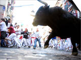 Running of the Bulls  San Fermin Festival  Pamplona  Navarra  Spain  Europe