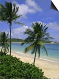 Palm Trees and Beach  Half Moon Bay  Antigua  Leeward Islands  Caribbean  West Indies