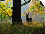 Deer  Favorite Park  Ludwigsburg  Baden-Wurttemberg  Germany  Europe