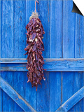 Red Chilli Peppers on Barn Door  New Mexico  United States of America  North America