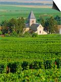 Vineyard  Oger  Champagne  France  Europe