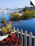 Camden Harbor  Maine  USA