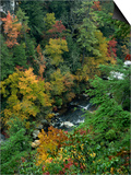 Linville Gorge and Autumnal Forest Canopy  Blue Ridge Parkway  North Carolina  USA