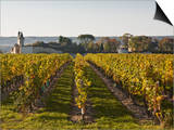 Vineyards Near to the Chateau of Chinon  Indre-Et-Loire  Loire Valley  France  Europe
