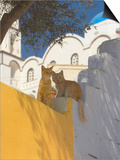 Cats in Akrotiri  Santorini  Cyclades  Greek Islands  Greece  Europe