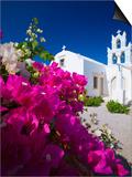 Greek Church and Flowers  Santorini  Cyclades  Greek Islands  Greece  Europe