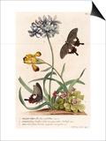1 Polyanthes  2 Oxalis  3 Iris