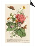 1 Ceratocephalus  2 Martynia  3 Narcissus