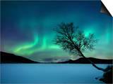 Aurora Borealis over Sandvannet Lake in Troms County  Norway