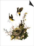 Audubon: Yellow Chat