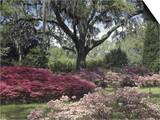 Orton Plantation Gardens  North Carolina  USA