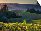 Healdsberg  Sonoma County  California: Vineyard and Winery at Sunset