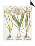 Leek And Irises  1613