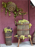 Grape Exhibit  La Festa Dell'Uva  Impruneta  Italy  Tuscany