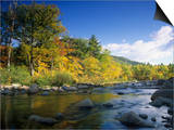 Swift River in the Autumn  White Mountains National Forest  New Hampshire  USA