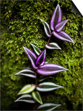 Green and Purple Leafs Grow Along a Mossy Tree  Photograhed with a Close-Up Macro Lens
