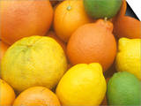 Citrus Fruits Grapefruit  Tangerine  Ugli  Orange  Lemon  Lime  Tangelo and Clementine