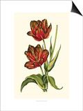 Vintage Tulips V