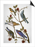 Audubon: Bluebirds