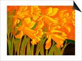 Big Daffodils