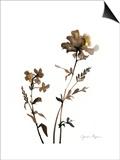 Watermark Wildflowers VI