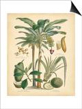Fruitful Palm II